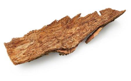 Cracked Bark Tree