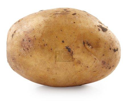 Photo for Potato isolated on white background - Royalty Free Image