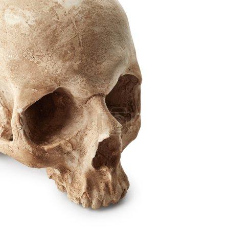 Human skull on white