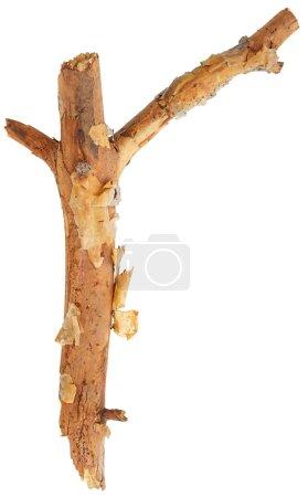 Tree stick on white