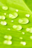 Green leaf with drops of water close up