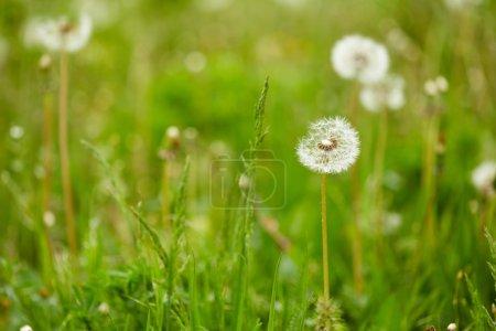 Foto de Diente blanco hermosa. Fondo de naturaleza - Imagen libre de derechos