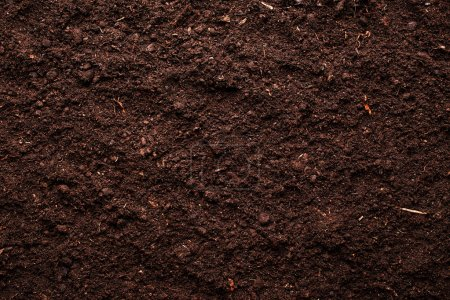 Photo for Soil background - Royalty Free Image