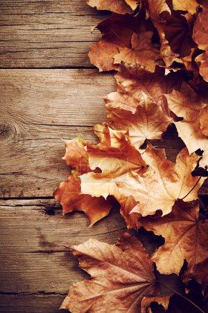 Foto de Las hojas de otoño sobre fondo de madera - Imagen libre de derechos
