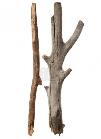 Tree sticks isolated on white background