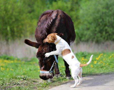 Photo pour Image lumineuse amusant âne et chien journée ensoleillée - image libre de droit