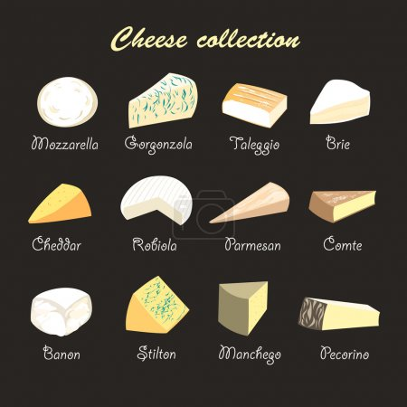 Graphic beautiful collection of cheeses on a dark ...