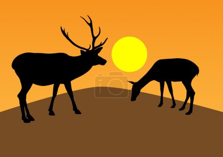 Deer at sunset. Vector illustration...