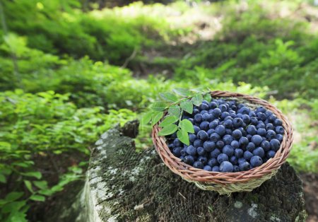 Photo for Basket with organic blueberry,healthy food - Royalty Free Image