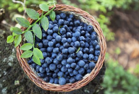 Photo for Delicious bio blueberry,fresh forest fruits - Royalty Free Image