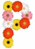 Písmeno P abeceda z květů izolovaných na bílém