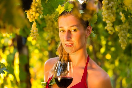 Woman with glass of wine in the vineyard with suns...