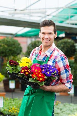 Gardener in market garden or nursery