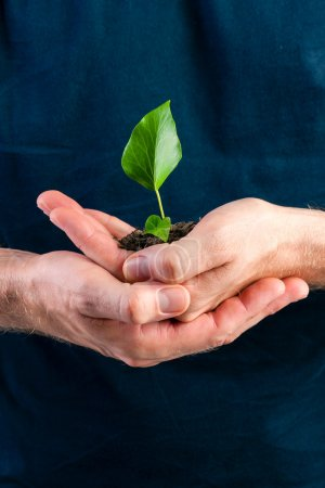 Man holding seedling in his hands