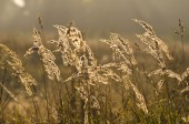 autumn morning grass blur background and sunrise light