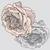 Tea rose hand-drawing Vector illustration