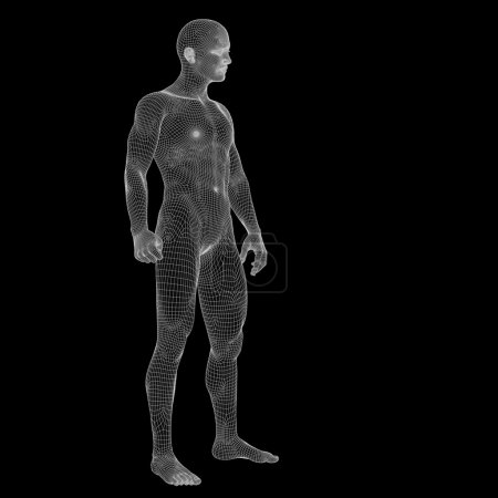 3D human made of wireframe or mesh
