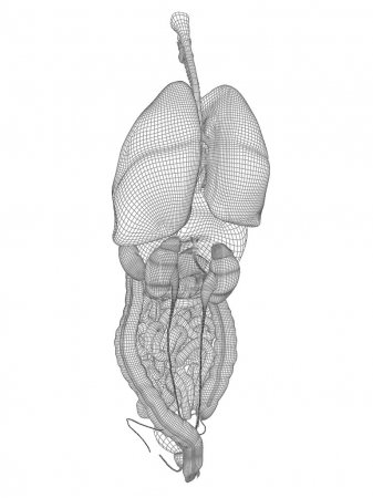 Wireframe mesh digestive system