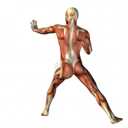 Man  for anatomy or sport designs.