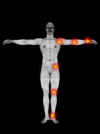 human anatomy mesh