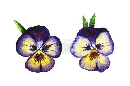 Photo pour Illustration dessinée à la main aquarelle Pansy ensemble de fleurs. - image libre de droit