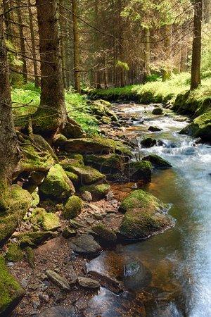 Photo pour La forêt primitive avec le sol mousseux et le ruisseau - HD - image libre de droit