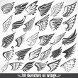 Big Set sketches of wings...