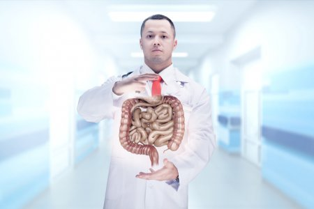 Doctor with stethoscope and digestive system on the hands in a hospital. High resolution.