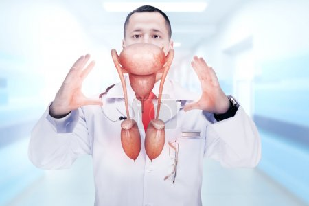 Doctor with stethoscope and male reproductive system on the hands. High resolution.