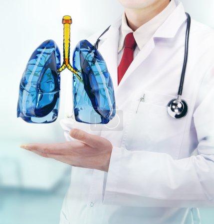 Photo pour Médecin avec poumons dans les mains dans un hôpital - image libre de droit