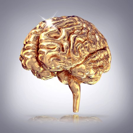 Golden brains on grey background.