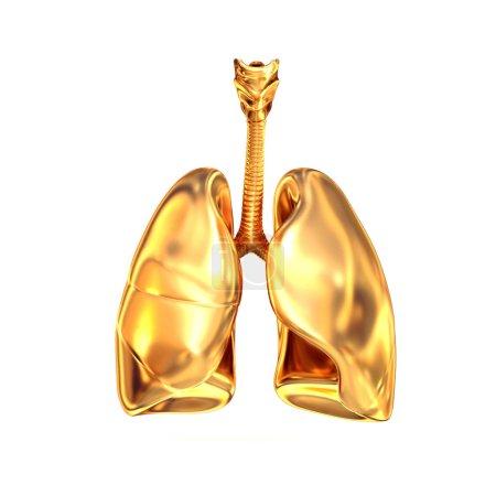 Photo pour Poumons dorés sur fond blanc. Haute résolution. rendu 3D - image libre de droit