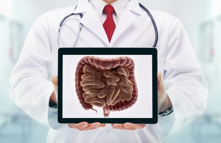 Doctor with stethoscope in a hospital. Digestive system on the tablet