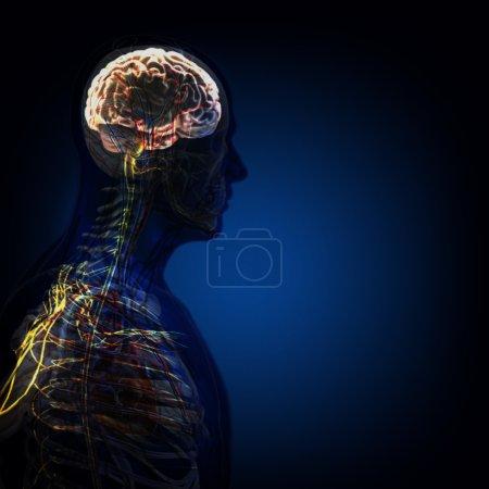 Le corps humain (organes) par des rayons x sur fond bleu