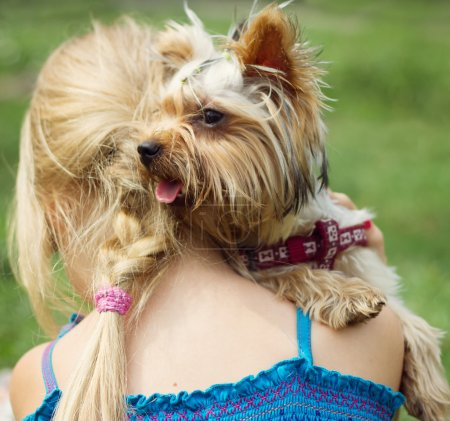 Yorkshire terrier on shoulder of 6 year old girl. looking to the left