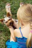Girl 5 years old back to camera plays with Yorkshire Terrier