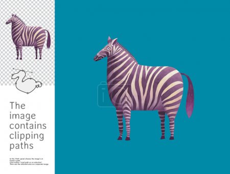 Photo for The illustration of a standing zebra.  A part of Dodo collection - a set of educational cards for children. The image has clipping paths and you can cut the image from the background. - Royalty Free Image
