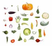 Hand-drawn vector vegetables isolated on transparent background - tomato spinach vegetable marrow corn rosemary green peas and beet olive eggplant salad onion leek potato carrot and so on