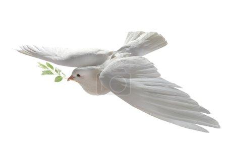 Photo pour White dove flying with green branch,concept of piece - image libre de droit
