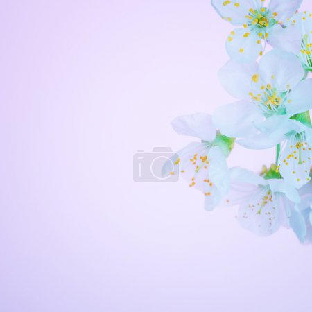 Beautiful blooming spring flowers