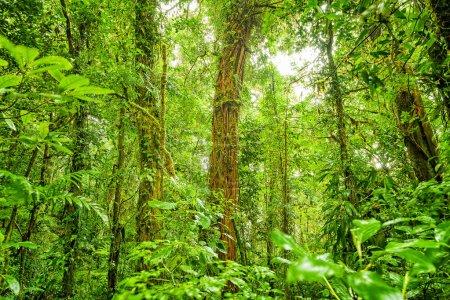 Rain forest green background