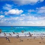 Singer Island beach seagulls at Palm Beach Florida...