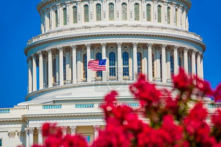 Photo pour Capitol building Washington DC jardin fleuri rose USA congrès US - image libre de droit
