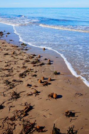 Mediterranean Posidonia beach in alicante Denia at Spain