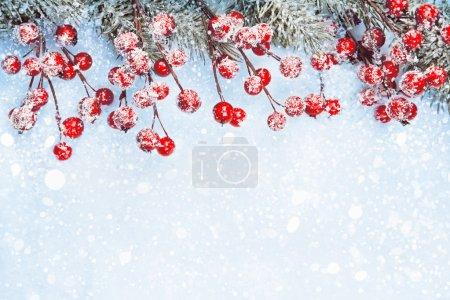 Photo pour Fond de Noël avec baies et sapin dans la neige - image libre de droit