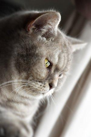 Pensativo chico gato