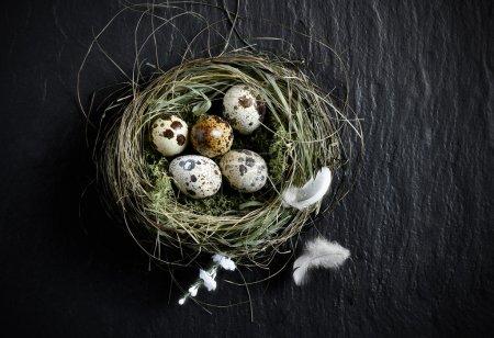 Quails Eggs Aerial