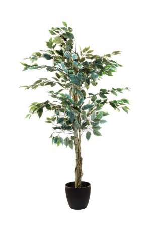 Artificial Fiscus Tree