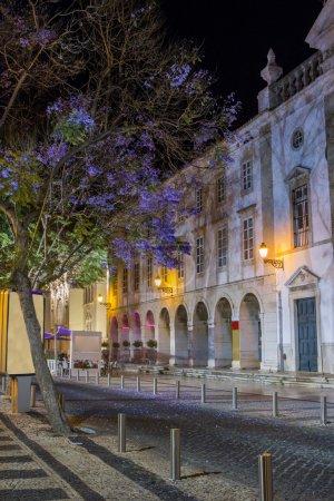 urban park of the center of Faro city