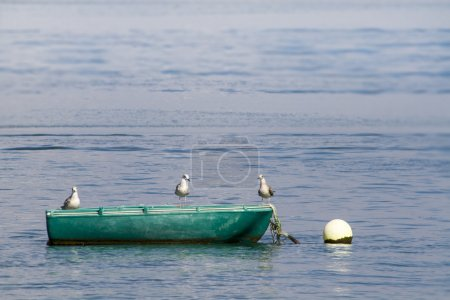 Anchored traditional fishing boat with three seagulls